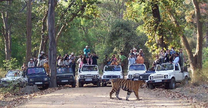 Jeep Safari Trips In India